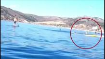 φάλαινα καγιάκ