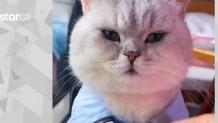 γάτα συμπεριφέρεται σαν άνθρωπος