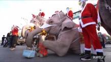 Ελέφαντες Άι Βασίληδες