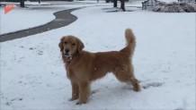 σκύλος χιόνι