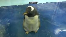 πιγκουίνος Άλεξ
