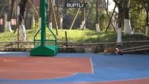 σκύλος λάτρης του μπάσκετ