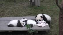 μουσείο με γιγαντιαία panda