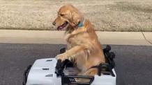 Σκύλος Οδηγεί