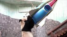 panda αστροναύτης