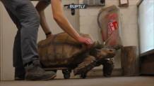 γενέθλια υπερήλικης χελώνας