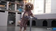Σκυλάκι Κάνει Πατίνι