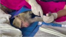 Μαϊμού/ reuters