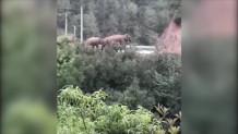 κοπάδι από άγριους ελέφαντες στην Κίνα