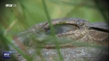 εικόνα από βίντεο