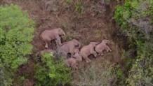 ελέφαντες βάρος