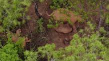 ελέφαντας και κουνούπι