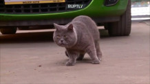 γάτα με την πιο ασυνήθιστη εμφάνιση