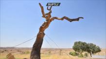 δέντρο που κάνει τις ευχές πραγματικότητα
