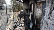 Φωτιά στην Αχαΐα: Η Επόμενη Ημέρα Στα Καμμένα