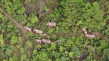 ελέφαντες Κίνα