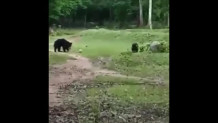 αρκούδα παίζει μπάλα με το μικρό της