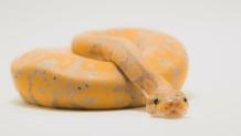 Πάτρα: Στο νοσοκομείο 15χρονος που τον δάγκωσε φίδι