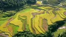 Ορυζώνες Κίνα