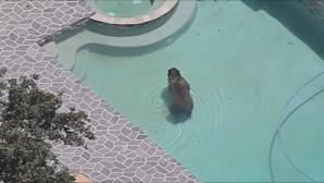 Η αρκούδα στην πισίνα