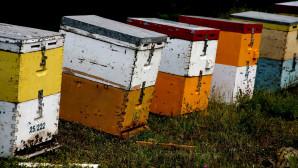 Κυψέλες μελισσών