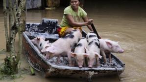 Η Evangeline Garcia σε μία βάρκα με γουρούνια