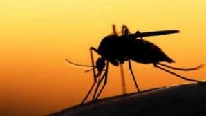 ιός του Δυτικού Νείλου, κουνουπια