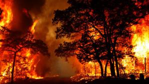 Πολύ υψηλός κίνδυνος πυρκαγιάς σήμερα – Ποιες περιοχές είναι στο «κόκκινο»