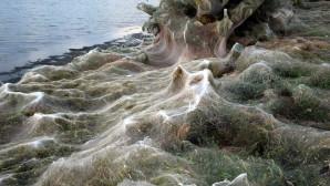 Τεράστιος ιστός αράχνης στο Αιτωλικό