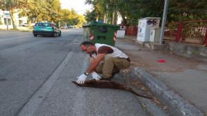 Βίδρα νεκρή στην Καστοριά
