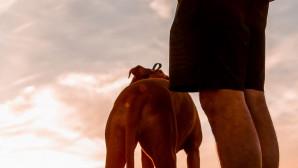Βακτήριο σκύλος Greg Manteufel