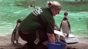 ο πιγκουίων σε απευθείας σύνδεση dating