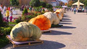Φεστιβάλ κολοκύθας στη Γερμανία