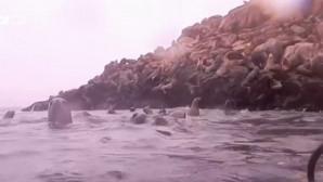 Θαλάσσια Λιοντάρια