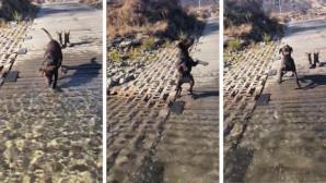 Κουτάβι αντικρίζει για πρώτη φορά ποτάμι