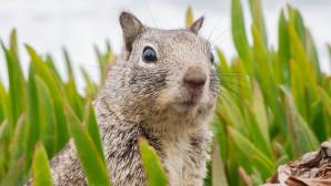 Η έκπληξη ενός σκίουρου που αντιλήφθηκε ότι τον φωτογράφιζαν