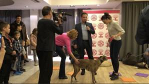 Άδωνις Γεωργιάδης μάθημα με σκύλο