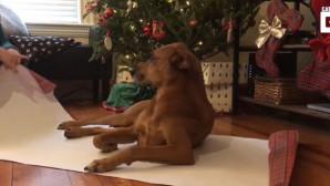 σκύλος-δώρο
