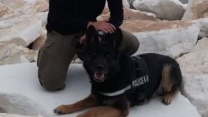 Το συγκινητικό tweet για τον «Τζάκι» τον σκύλο της ΕΛ.ΑΣ