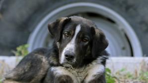 σκυλος τεμπη