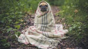 Σκύλος κουκουλωμένος με κουβέρτα