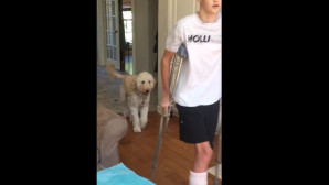 Σκύλος κουτσαίνει μαζί με το αφεντικό του, που έχει πατερίτσα