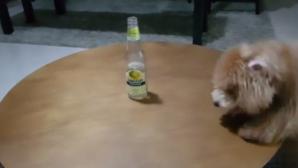 σκύλος-μπουκάλι