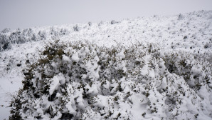 χιόνια