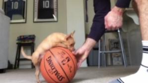 σκύλος ισορροπεί σε μπάλα