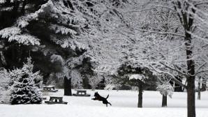 σκύλος τρέχει στα χιόνια