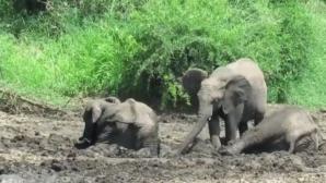 ελέφαντας λουτρό