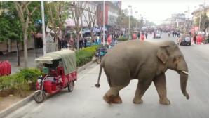 Ελέφαντας πόλη Meng