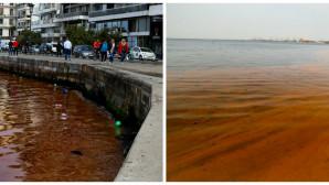 ερυθρα παλιρροια