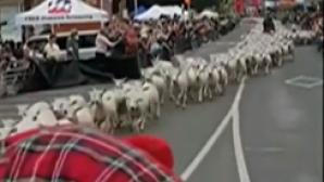 κόσμος πρόβατα